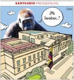 El mico se convirtió en orangután.